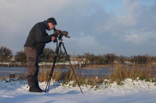 comptage des oiseaux en hiver